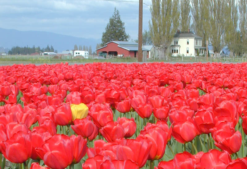 http://www.motogrrl.com/pix_01/tulips/think-different-2.jpg